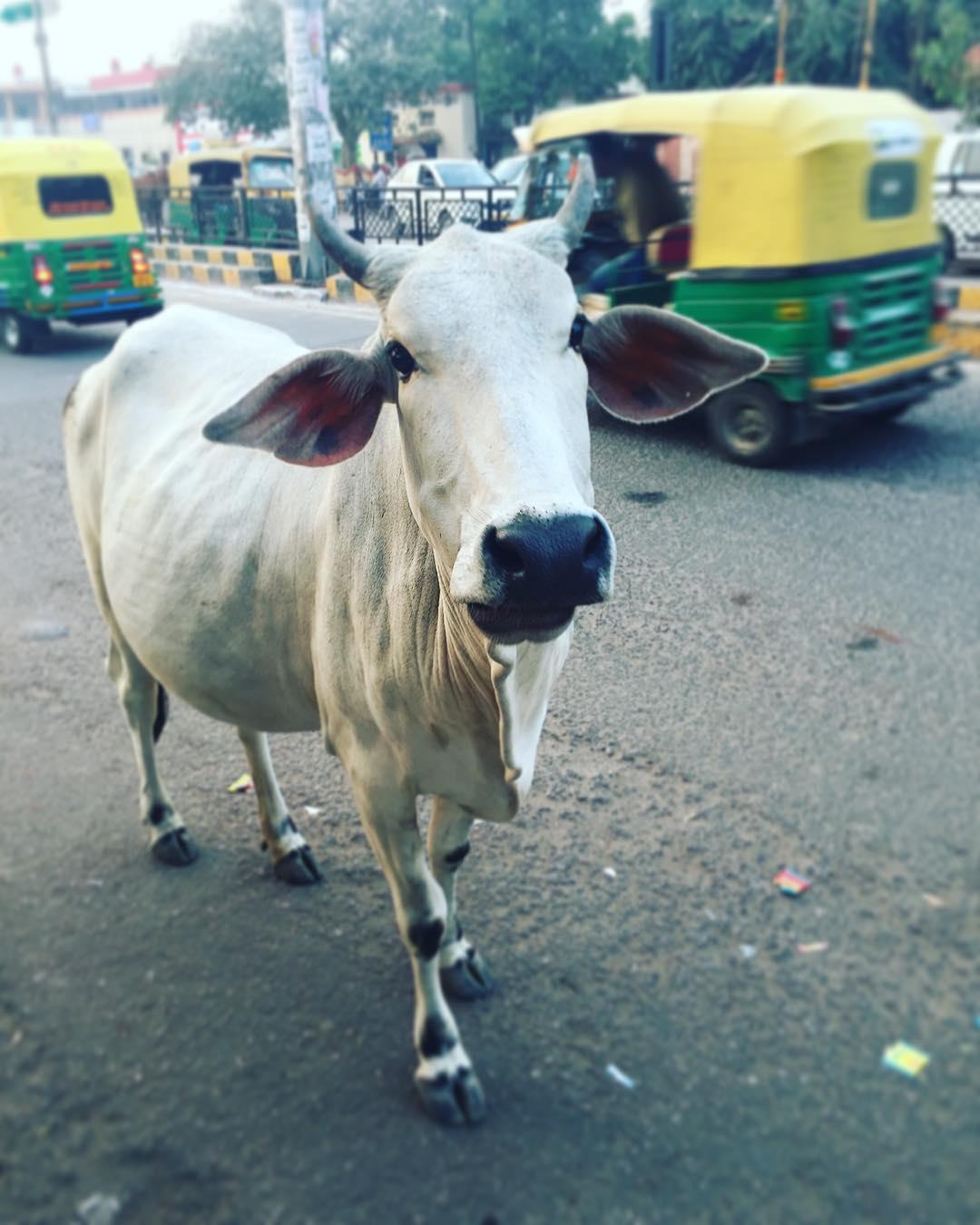 Le chaos de Delhi